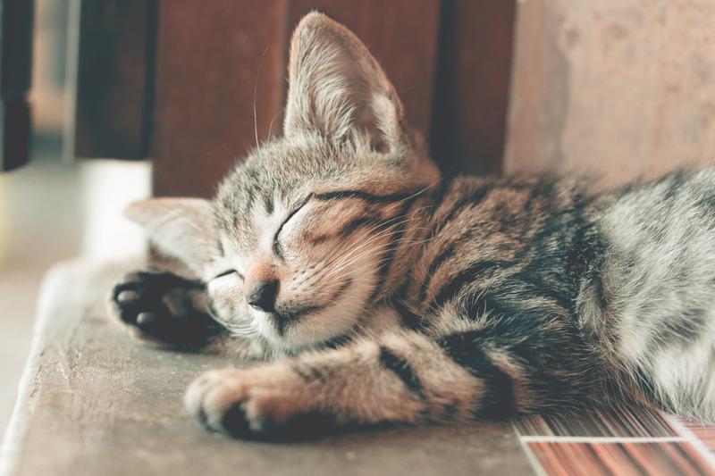 Ako spánok ovplyvňuje vaše zdravie, postavu a výkon