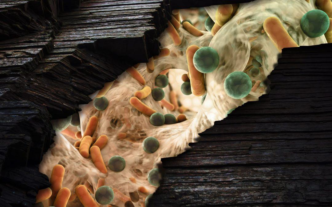 Mikrobióm